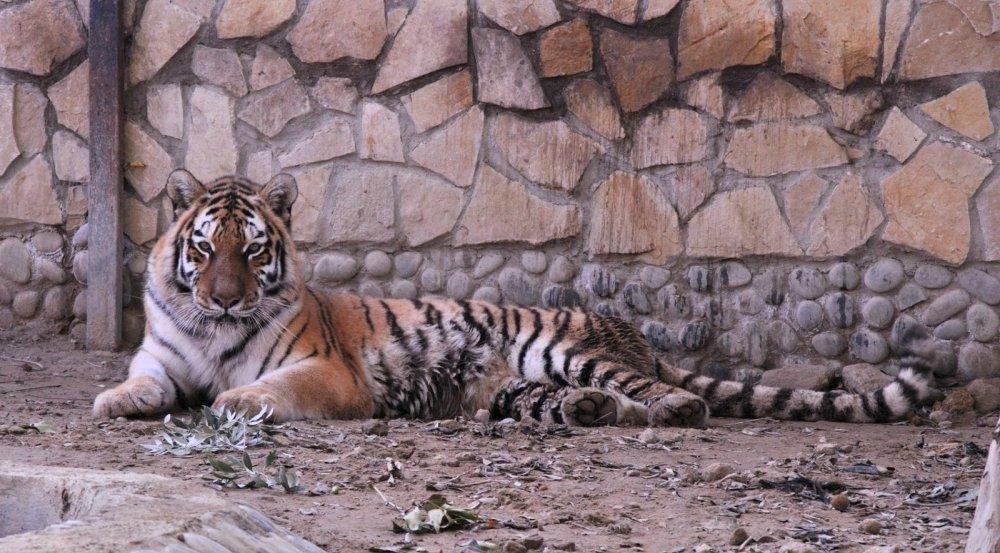 Бакинский зоопарк в столице Азербайджана