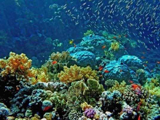фото Красного моря в Египте