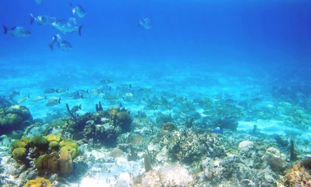 подводный мир страны