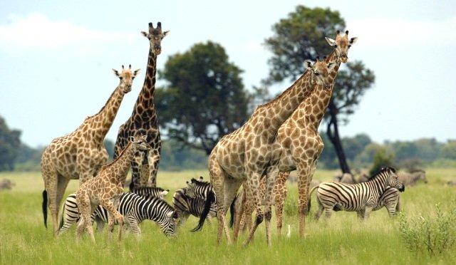 животные Ботсваны