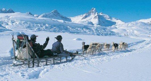 ездовые собаки в Гренландии