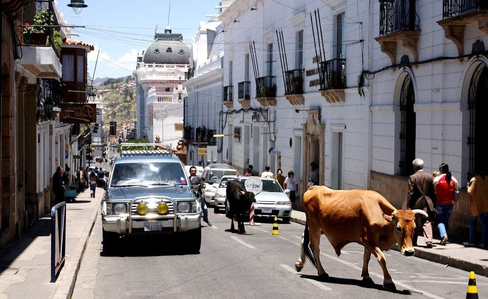 домашний скот на улицах